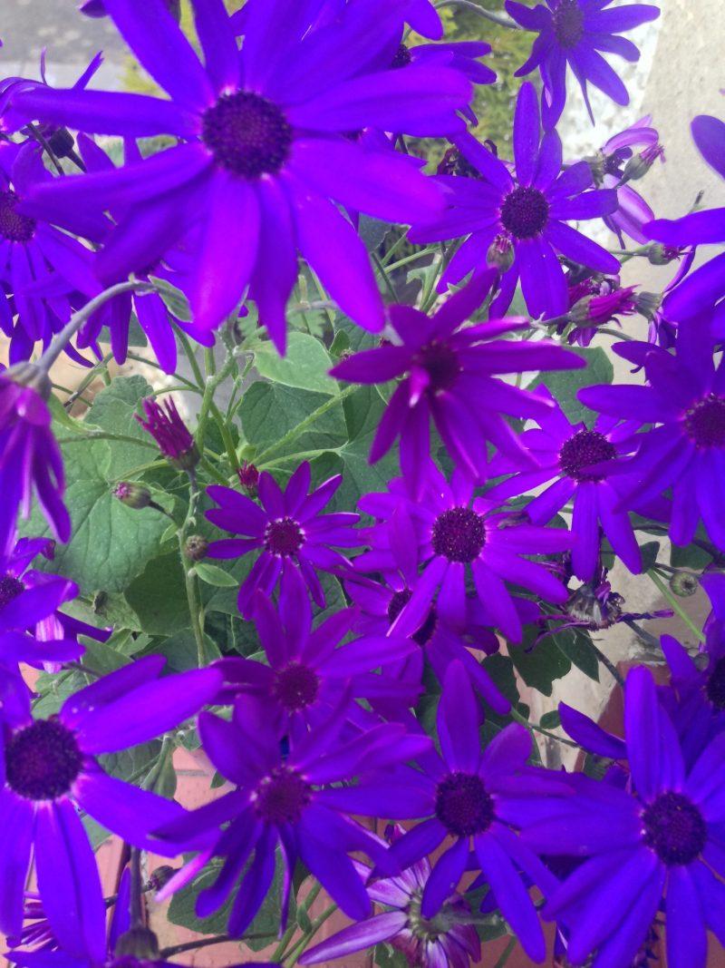 Bright purple flowers.