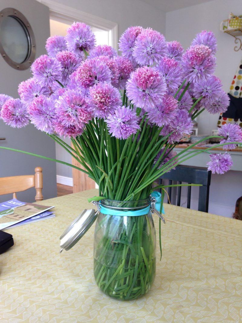 Purple clover stalks in glass jar.