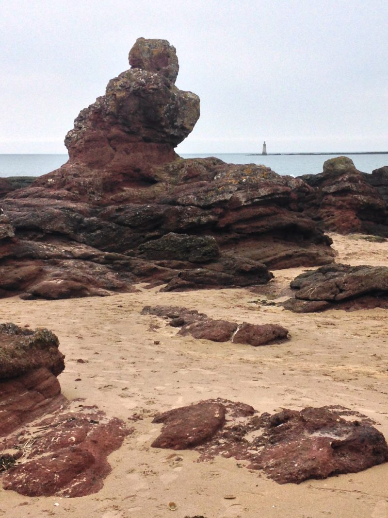 Turning 50: Interesting rocks and lighthouse at Seacliff beach near North Berwick.