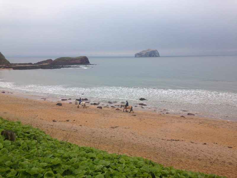 Turning 50: My birthday on Seacliff beach with ponies and the Bass Rock.
