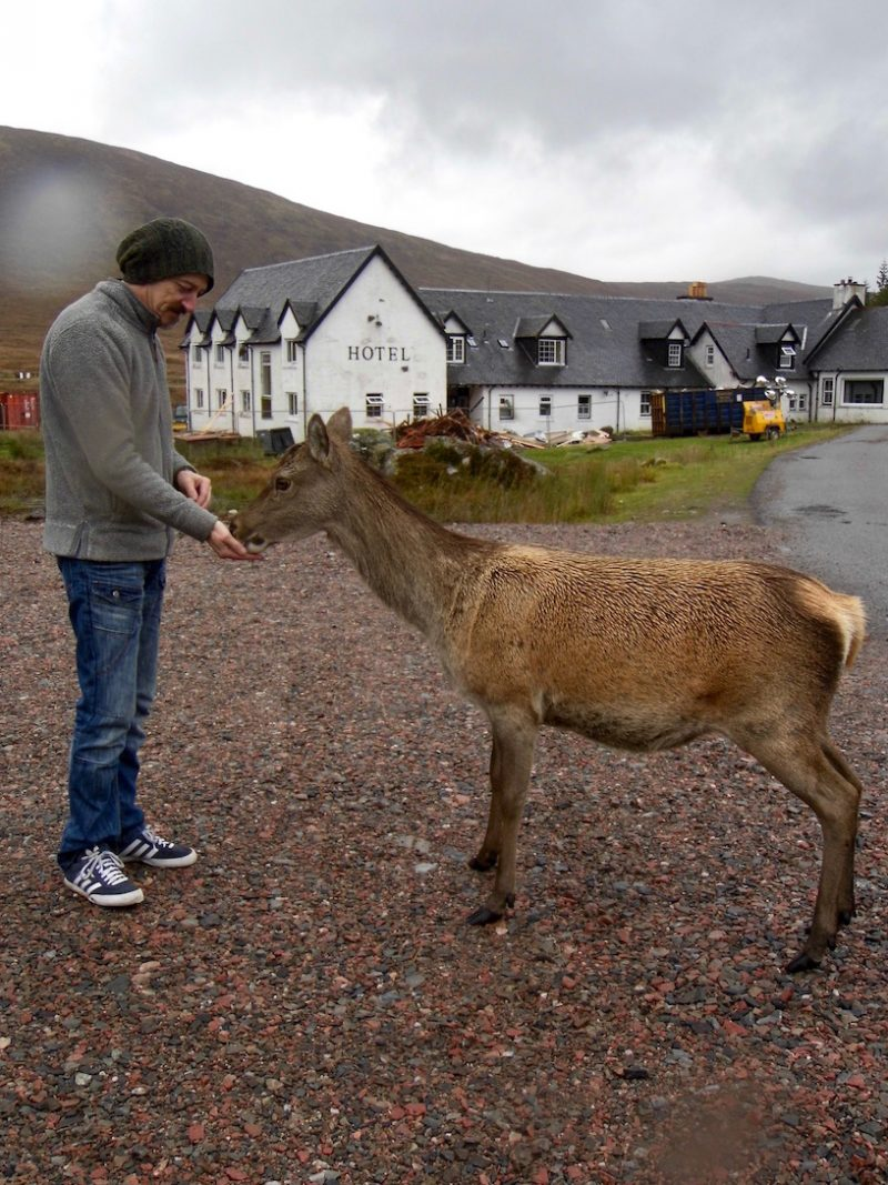 Feeding deer at Ranch Moor, Scottish Highlands.