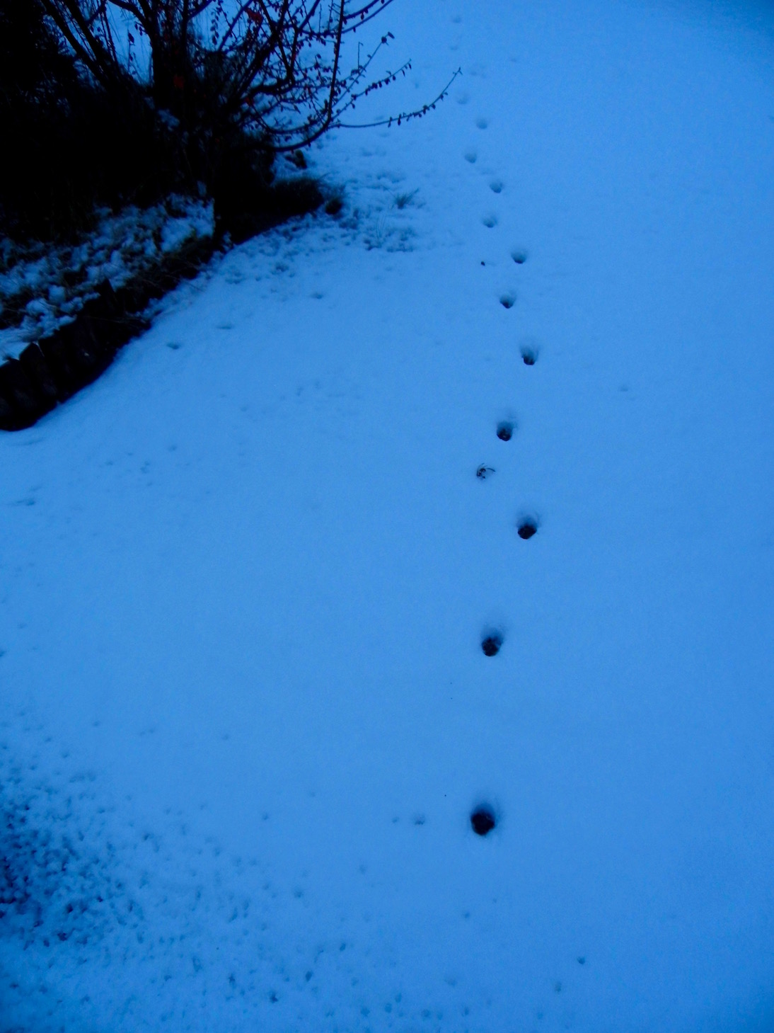 Footsteps in the snow, New Year 2018. Stars & Stems blog, Emerald Dunne Art.