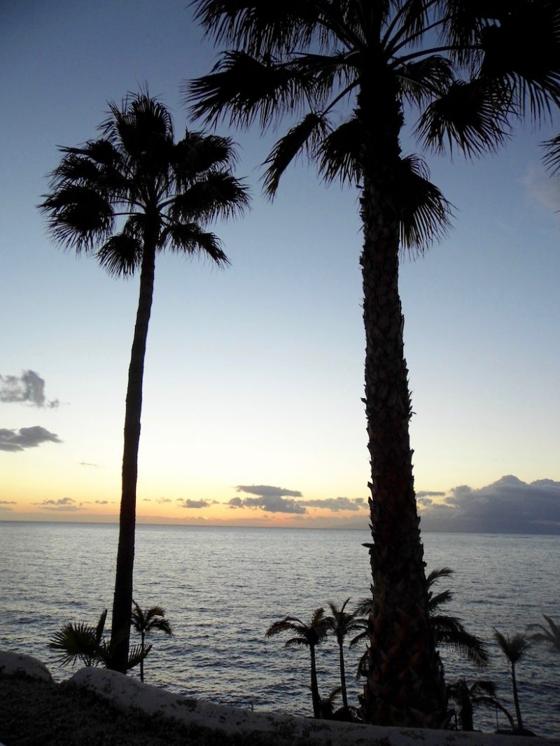 February 2018 Round-up: Palm trees in the sunset on the Costa Adeje.